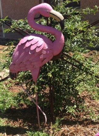 flamingo_garden