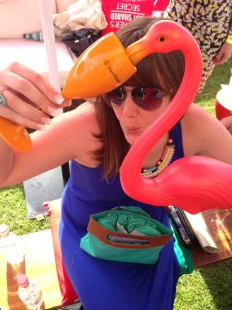 Flamingo_sydney