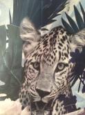 zoologydress2