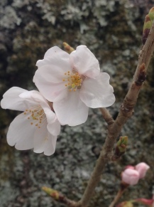 Japan_blog (28)