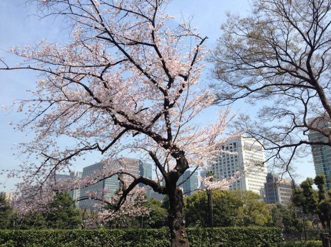 Japan_blog (46)